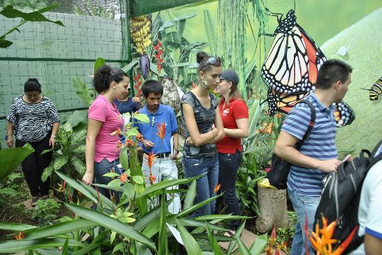 Butterfly Kingdom: Inside view