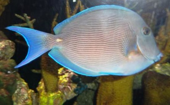 The Loxahatchee River Center: Exotic fish