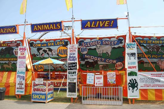 Montgomery County Agricultural Fair: The unusual animal display @ the Fair - MUST SEE $2 each