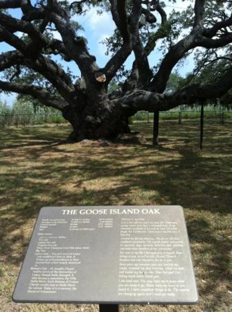 Goose Island State Park : 1,000 year old