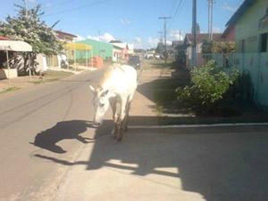 Amazonas :                   Main Road in Abadiania Brazil