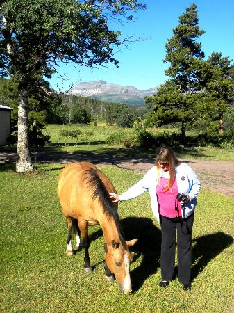 Bison Creek Ranch: Tame Horse that greets guests