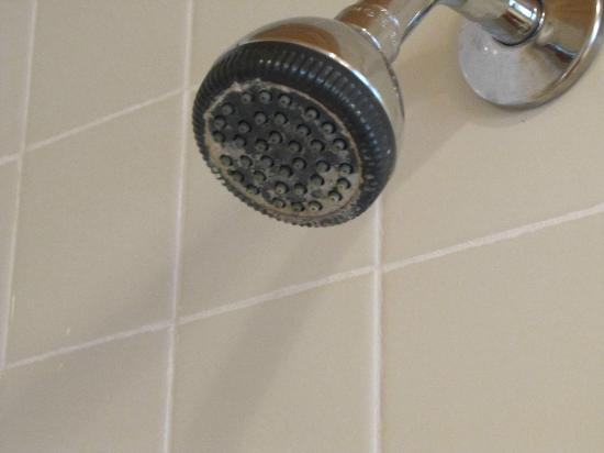 The Sands Resort: Shower head caked in hard water