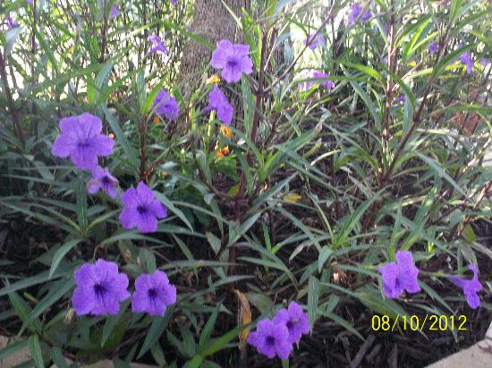 The Saint Augustine Beach House: Purple flowers in the garden of the hotel