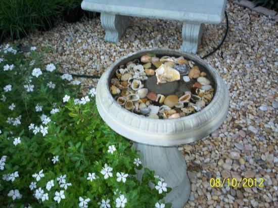 The Saint Augustine Beach House: A birdbath full of pretty shells...