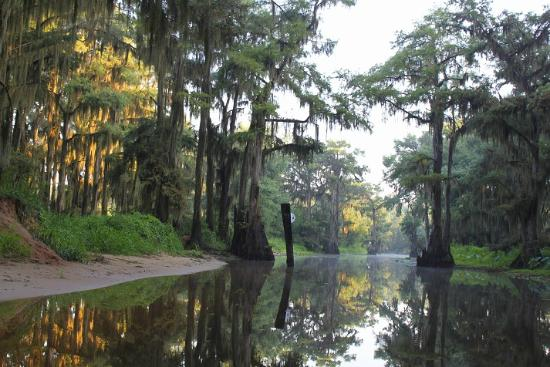 Caddo Lake State Park Karnack All You Need To Know