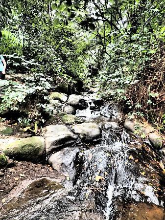 Finca Rosa Blanca Coffee Plantation Resort: Waterfall on coffee tour
