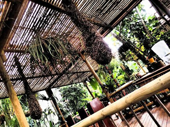 Finca Rosa Blanca Coffee Plantation & Inn: Orapendula bird nest in the restaurant