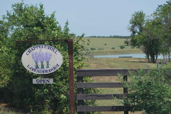 Chappell Hill Lavender Farm : Lavender Farm Gate Sign