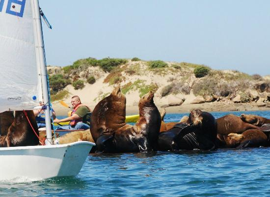 Morro Bay, CA: Boaters and sea lions share marina