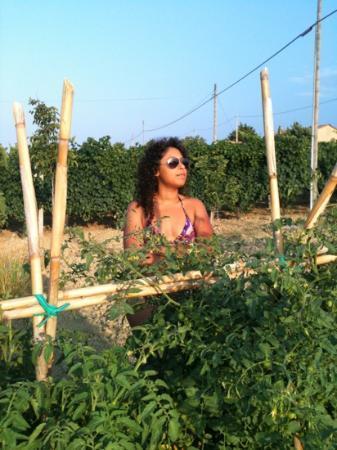 Vittoria - Il Graditempo: orto coltivato dell'agriturismo