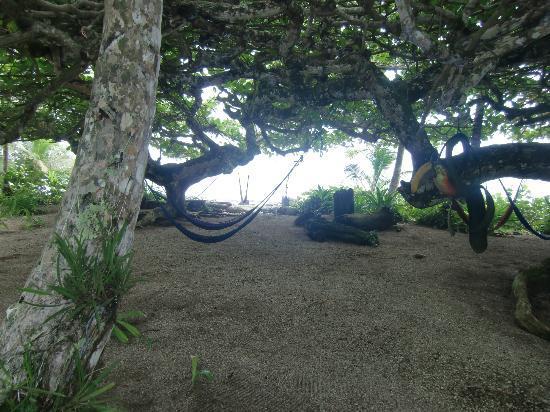 La Piscina Natural: Garden