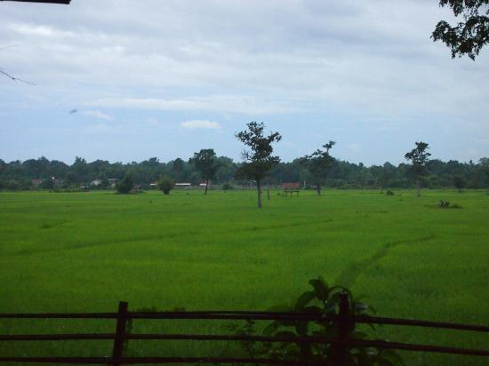 Ban Sufa Garden Resort : View of the rice field from the sitting area