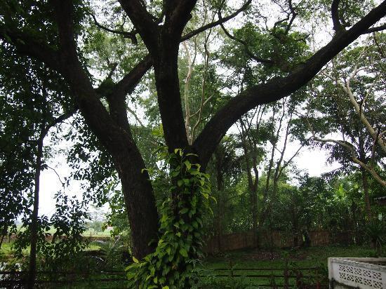 Ban Sufa Garden Resort: Garden