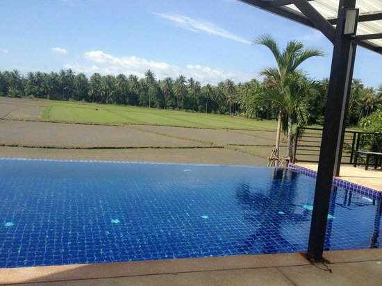 Fun-D Hotel: Swiming Pool with the rice fileds