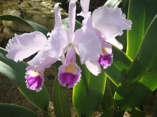 Botanischer Garten Muenchen-Nymphenburg: orquideas en el jardin botanico