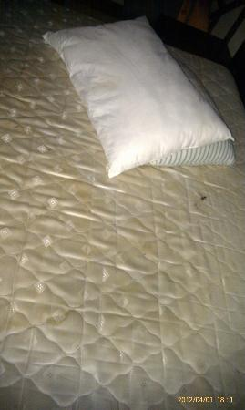 Hotel Tree of Life: the unprepared room they gave us with dirty pillows 