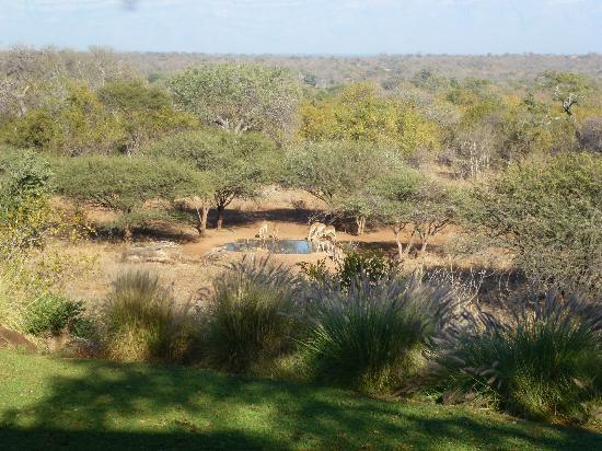 Khaya Ndlovu Manor House: View of Impala from Pool