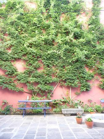 Casa Vitoriana: The wisteria in front of Goiaba
