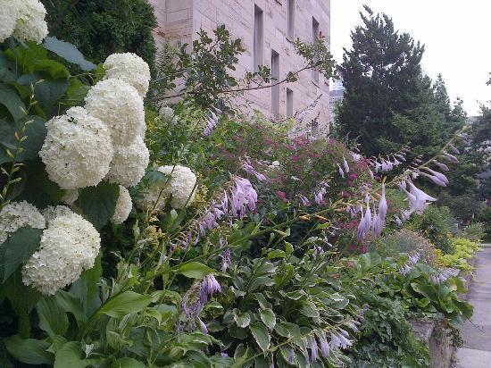 University of Toronto: Green and flowery