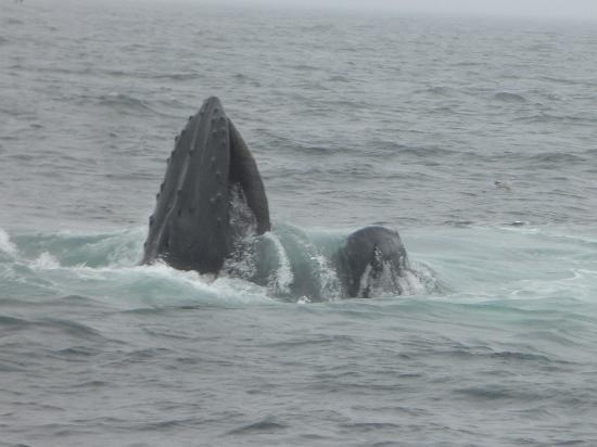Winstead Inn and Beach Resort: Whale tour - a mouthful of plankton