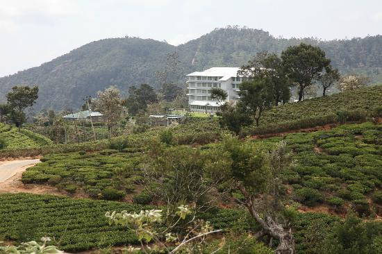 Heritance Tea Factory: Hotel from the track in