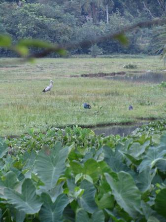 Talangama Wetland: The lake filled with birds, plants, and lizzards