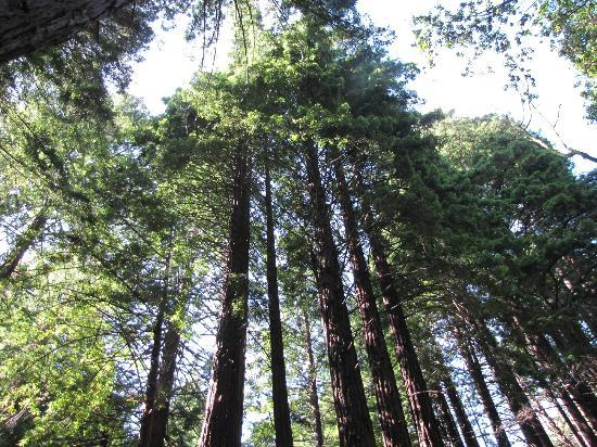 Limekiln State Park: Wow, we love Redwoods!
