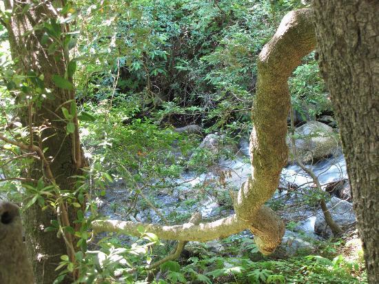 Limekiln State Park: Limekiln Creek