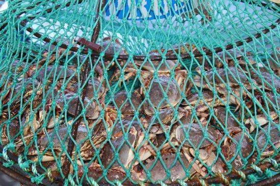 Tranquility Cove Adventures: Crabbing