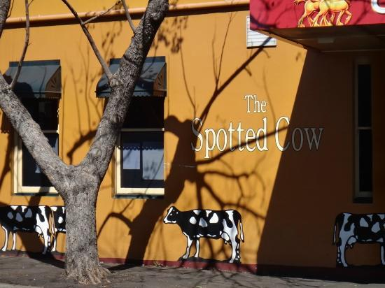 The Spotted Cow: Cow on the Wall