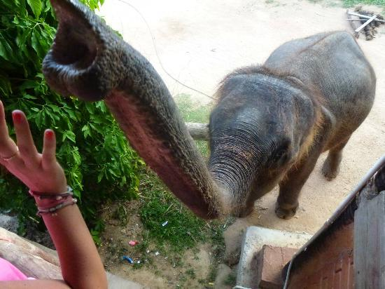 Ang Thong, Thailandia: elefante 1
