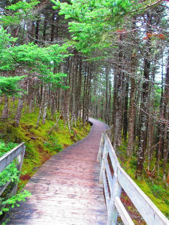 Salmonier Nature Park : Trails at the park
