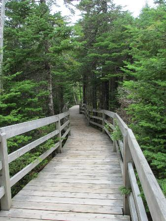 Holyrood, Canada: beautiful boardwalk