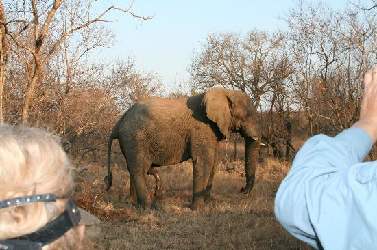 Thornybush Waterside Lodge: Elephants were in plenty