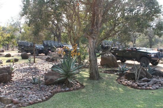 Thornybush Waterside Lodge: Gardens at the camp