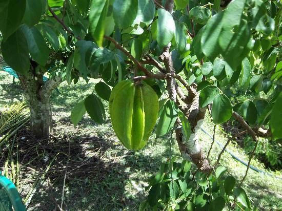 MARDI Langkawi Agro Technology Park照片
