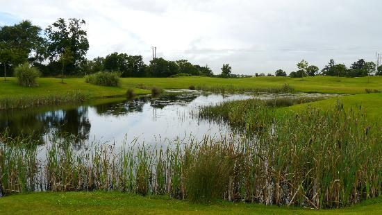 Roganstown Hotel and Country Club: another view of the golf course