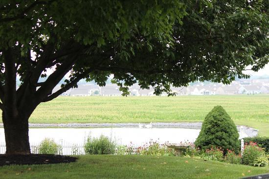 Clearview Farm Bed and Breakfast: View of the grounds