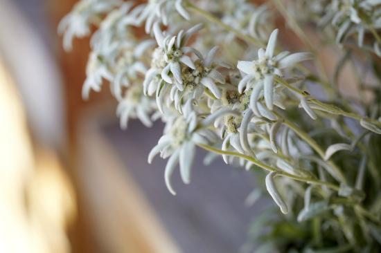 Bergrestaurant Bühlberg: Blumendekoration
