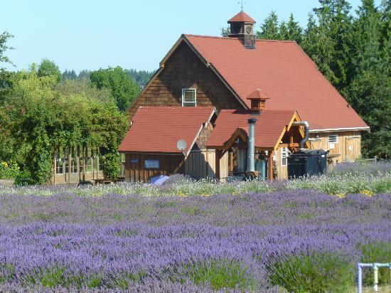 Purple Haze Lavender Farm 사진