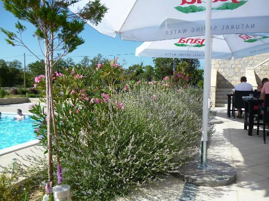 Pansion Skelin: Breakfast next to the pool with the bees and lavender plants
