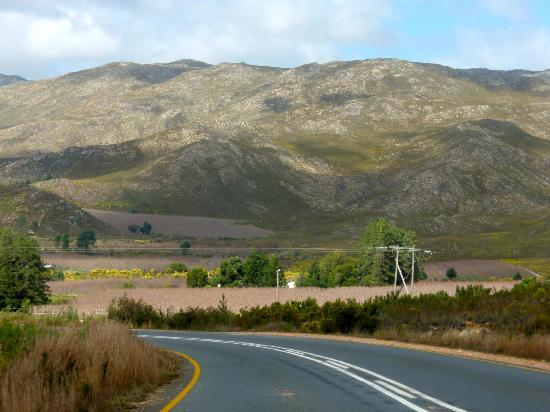 Franschhoek Pass: Fileds of Fruit Trees