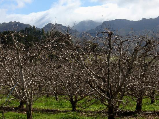 Franschhoek Pass: Fruit Trees