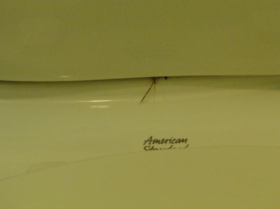 Ramada Plaza Anaheim: a smashed cockroach in the toilet...iac