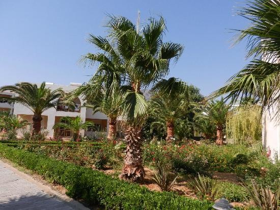Hotel Delfina Beach: jardin