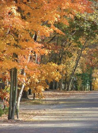 Holly Shores Camping Resort: we love fall