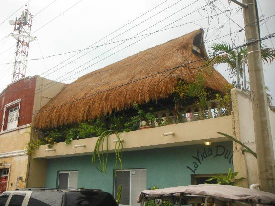 La Vida Dulce Casitas: Palapa on roof of La Vida Dulce - great for relaxation!
