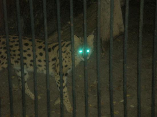 Warszawskie Zoo : City Zoo Warsaw