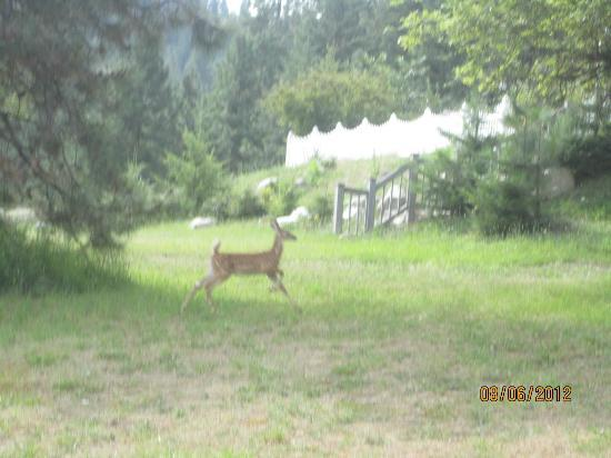 Aspen Meadows Bed & Breakfast: Bambi